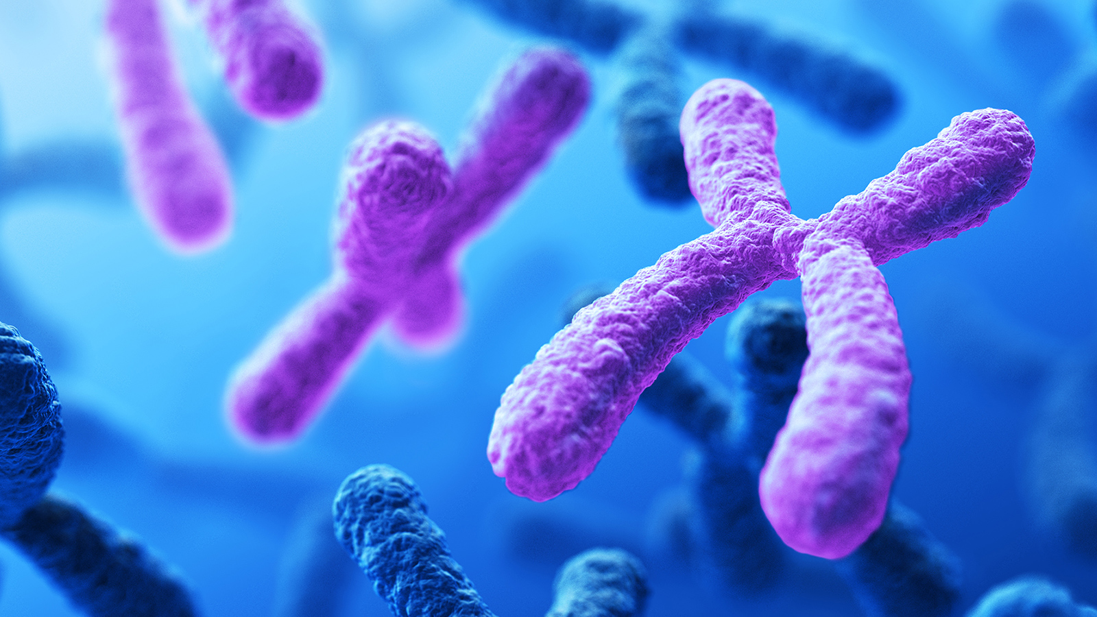 Chromosomes, the building blocks of DNA.