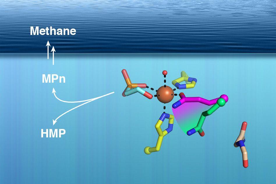 Researchers establish long-sought source of ocean methane