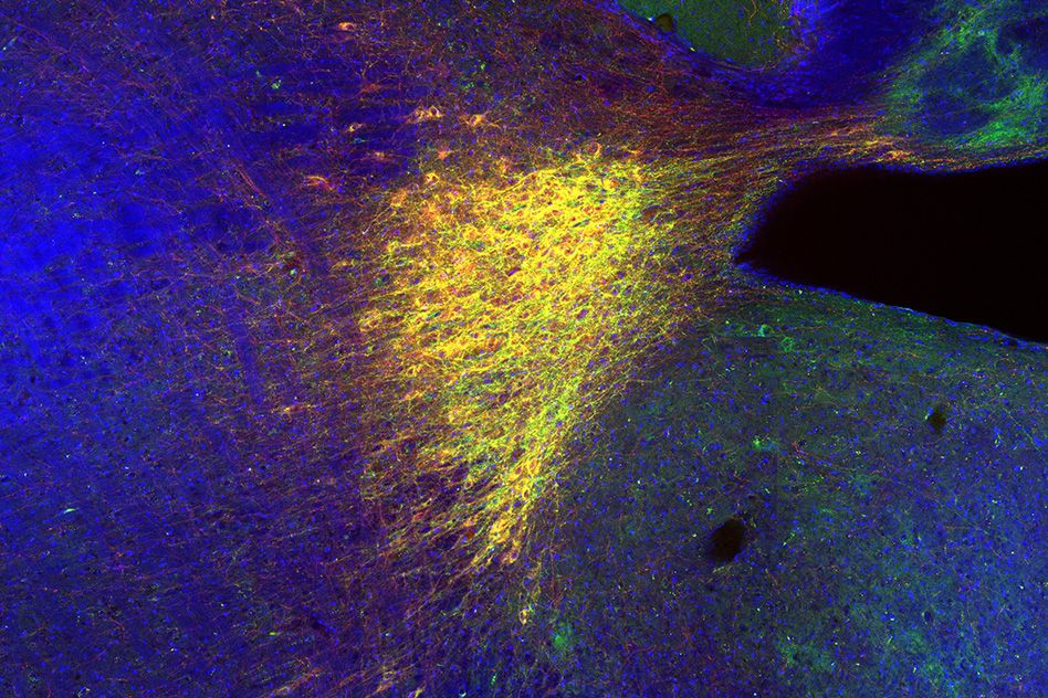 How the brain selectively remembers new places