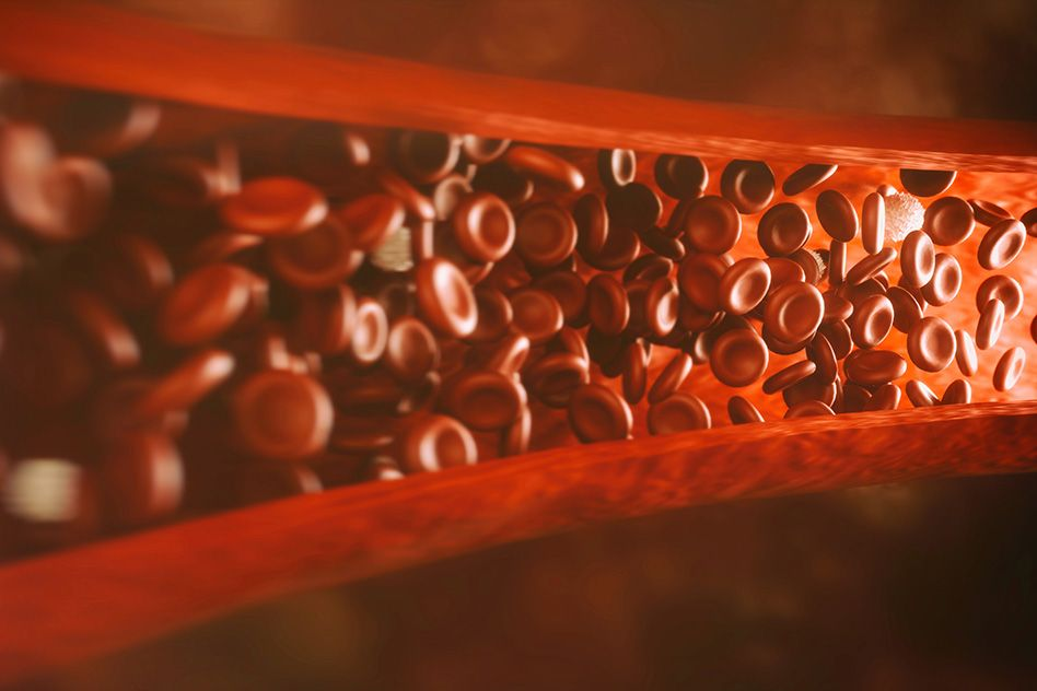 Study suggests method for boosting growth of blood vessels and muscle