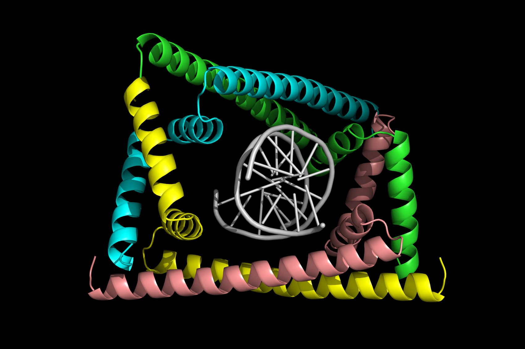 Detangling DNA replication