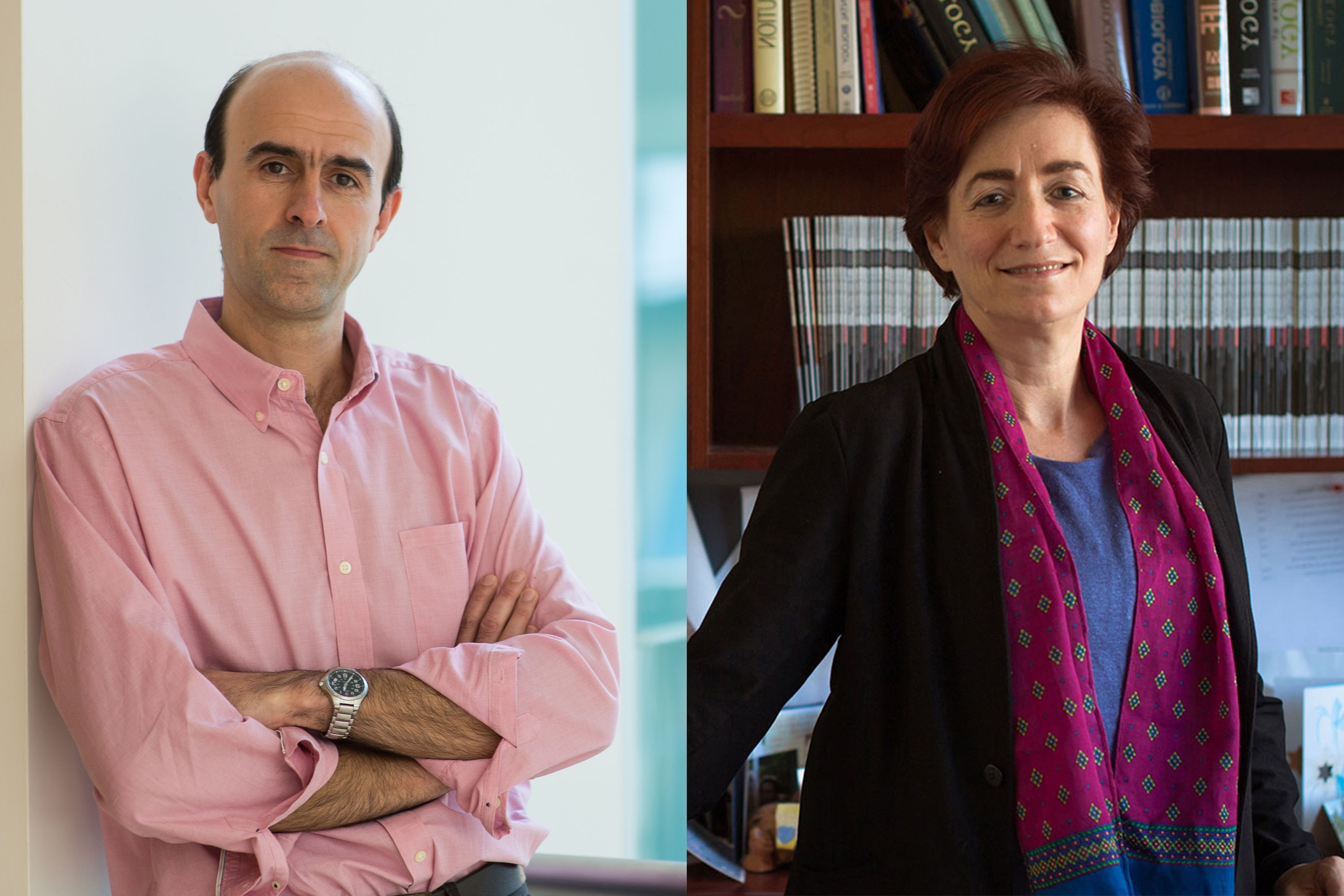 Jazayeri and Sive awarded 2019 School of Science teaching prizes