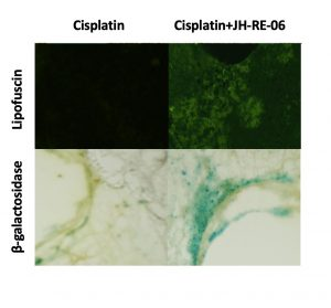 Grid of 4 microscopy images
