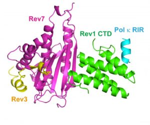 Colorful protein structures